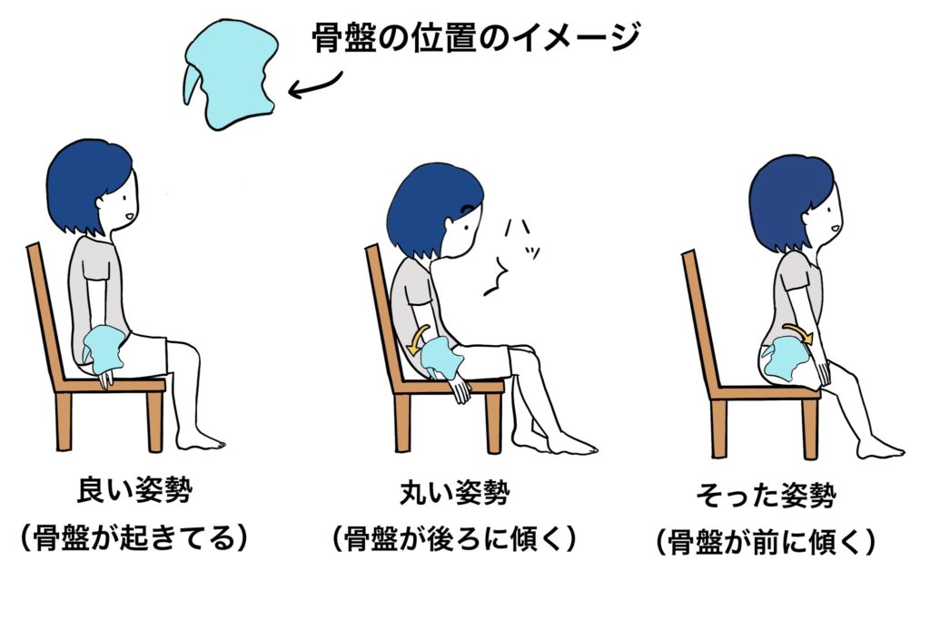 どうして骨盤矯正椅子は座る姿勢を良くしてくれるのか?