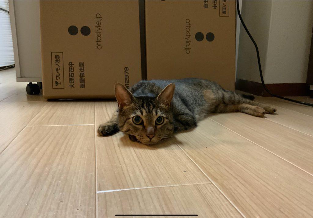 熱くてとけてる猫の写真