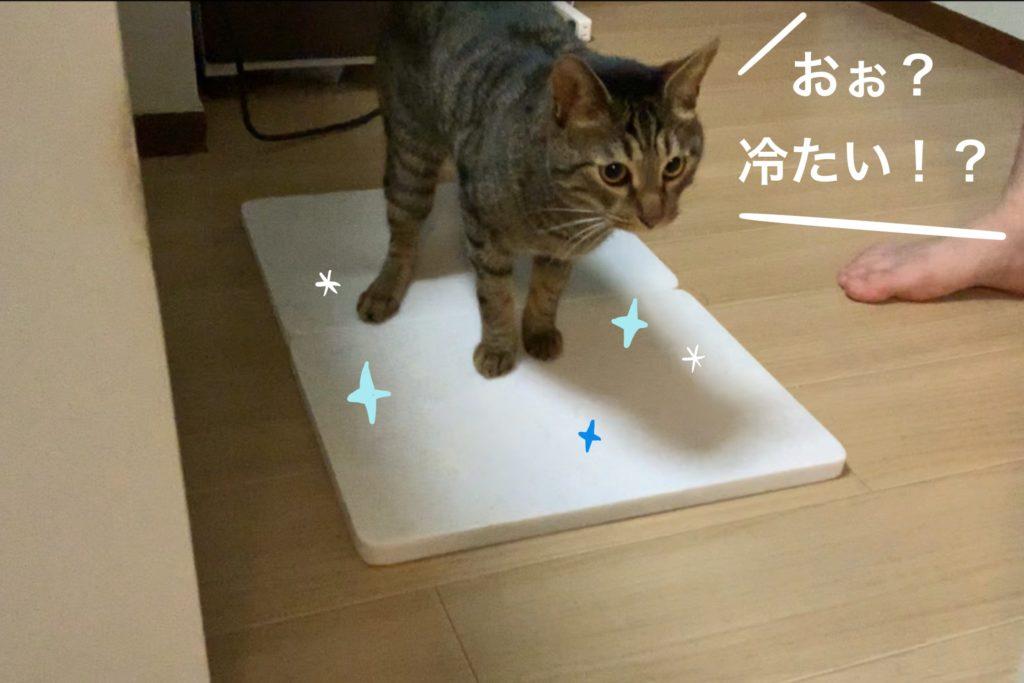 大理石の冷たさを感じる猫の写真