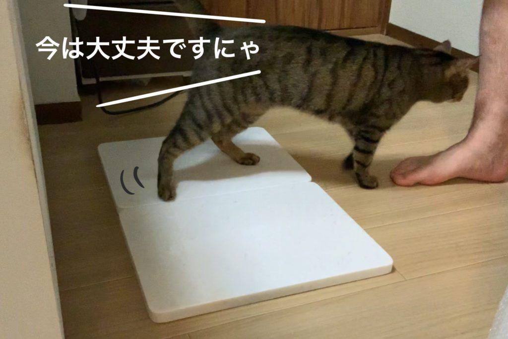 大理石に乗ってくれない猫の写真
