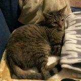 【治療費も公開】うちの猫が腸炎と膵炎で入院…症状と経過について
