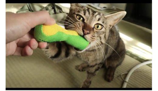 【主の原因は腸炎だったのか?】ひじき(猫)が無事退院しました!